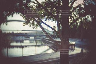 風景の写真・画像素材[555415]