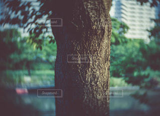 風景の写真・画像素材[555443]