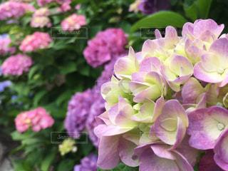 花の写真・画像素材[544186]