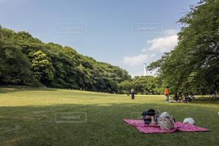 芝生の写真・画像素材[544677]