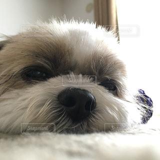 犬の写真・画像素材[544701]