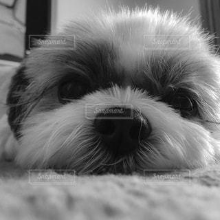 犬の写真・画像素材[544709]