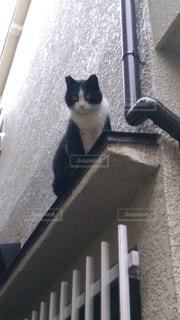 猫 - No.546628