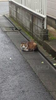 猫の写真・画像素材[546636]
