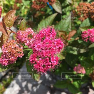 近くの植物にピンクの花のアップ - No.737731