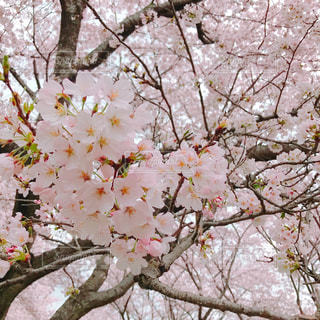 春 - No.545525