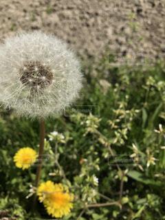 花の写真・画像素材[545551]