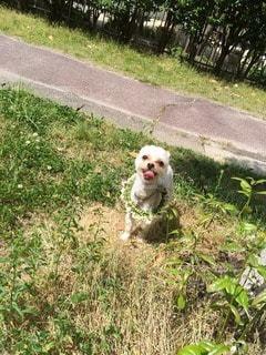 犬の写真・画像素材[25525]