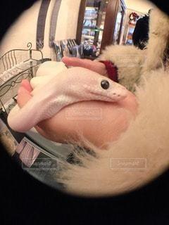 爬虫類の写真・画像素材[45430]