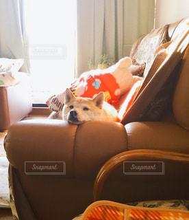 犬の写真・画像素材[545934]