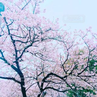 春 - No.545885