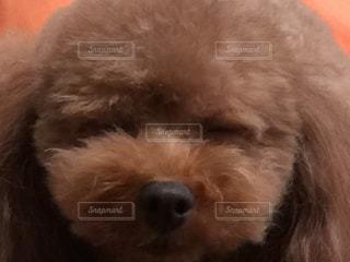 犬の写真・画像素材[545904]