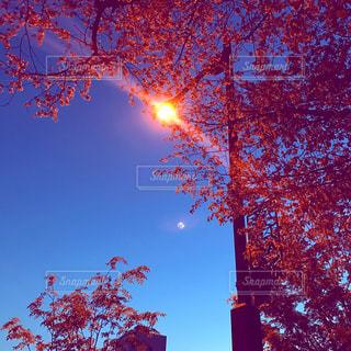 自然の写真・画像素材[547781]