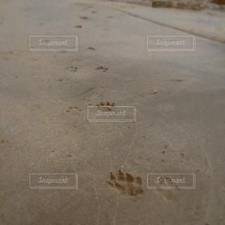 beachの写真・画像素材[549710]