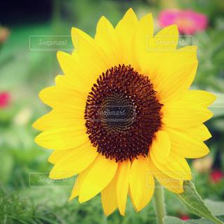 花の写真・画像素材[609237]