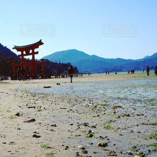 歩いて安芸の宮島の鳥居までの写真・画像素材[722283]