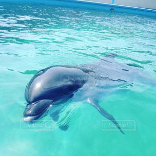 イルカの写真・画像素材[548368]
