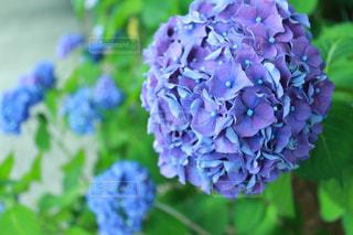 花の写真・画像素材[562124]