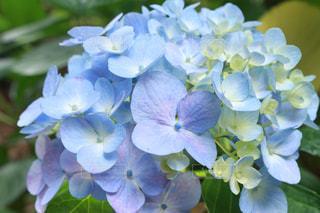 花の写真・画像素材[562132]