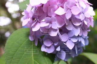 花の写真・画像素材[562134]