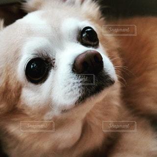 犬 - No.17063