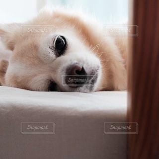 犬の写真・画像素材[162261]