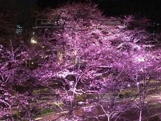 桜 - No.549438
