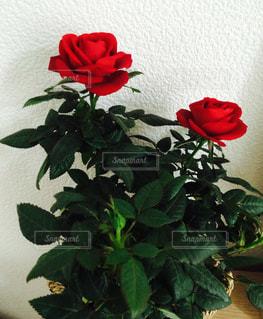花の写真・画像素材[549441]