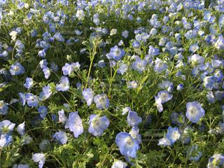 お花畑の写真・画像素材[2093799]