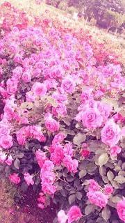 自然の写真・画像素材[36604]