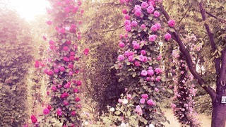 自然の写真・画像素材[36665]
