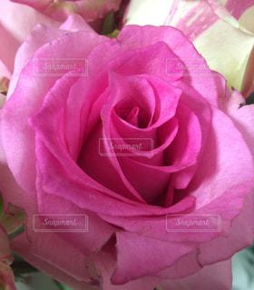 花の写真・画像素材[555898]