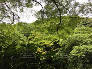 自然の写真・画像素材[547888]