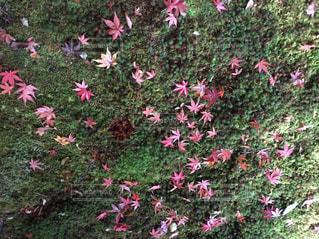 自然の写真・画像素材[547960]