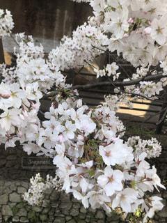 テーブルの上の花の花瓶の写真・画像素材[1220780]