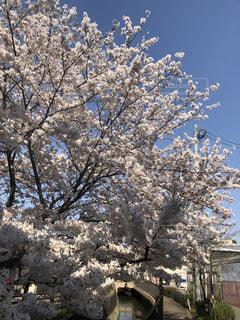 近くの木のアップの写真・画像素材[1220782]