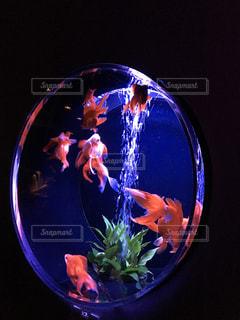 魚の写真・画像素材[563709]