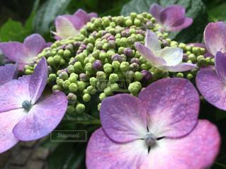 花の写真・画像素材[594738]