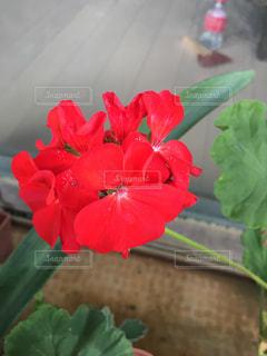 花の写真・画像素材[567745]