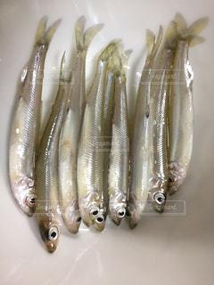 No.551601 魚