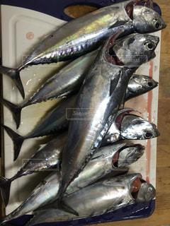 No.553139 魚