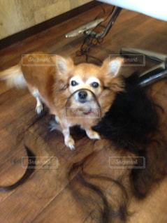 木製の床に小さな犬 - No.815377