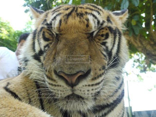 動物の写真・画像素材[550447]