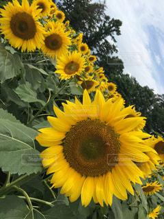 花の写真・画像素材[551074]
