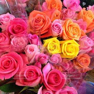 花の写真・画像素材[553949]