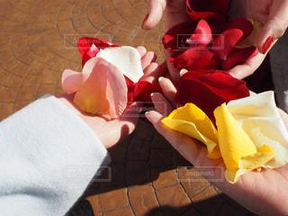 テーブルの上のピンクの花のグループの写真・画像素材[996190]