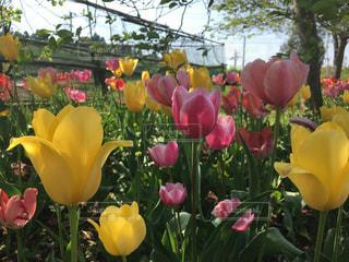 近くの花のアップの写真・画像素材[1231538]