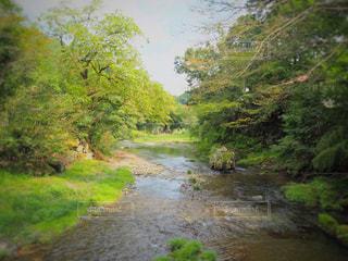 川の側の木がパス - No.811535