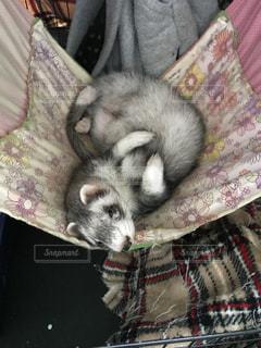 動物の写真・画像素材[550551]