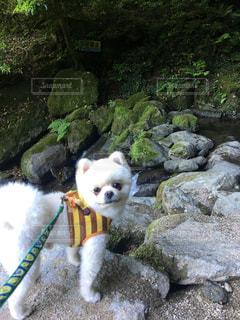 犬の写真・画像素材[550704]